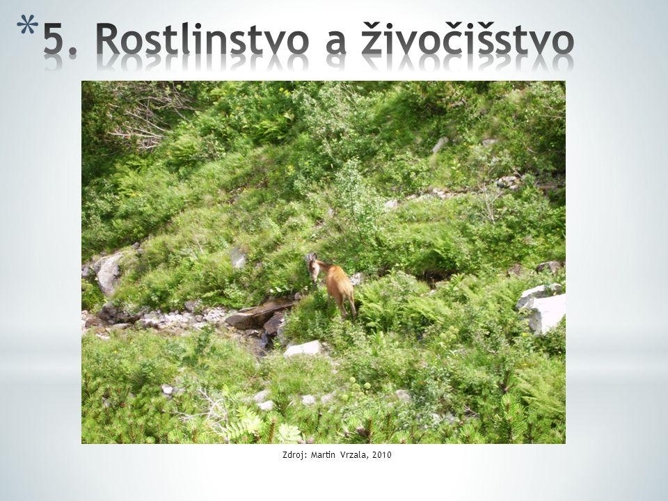 5. Rostlinstvo a živočišstvo