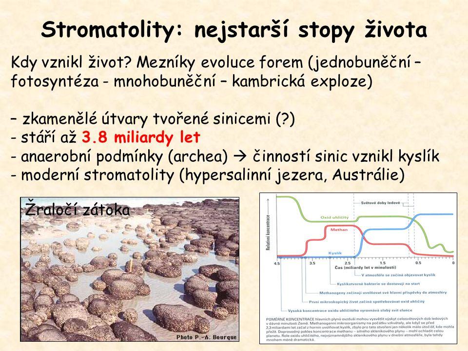 Stromatolity: nejstarší stopy života