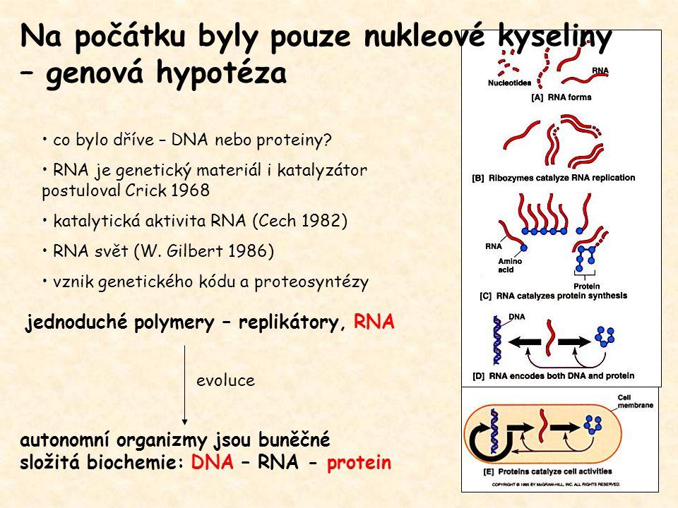 Na počátku byly pouze nukleové kyseliny – genová hypotéza