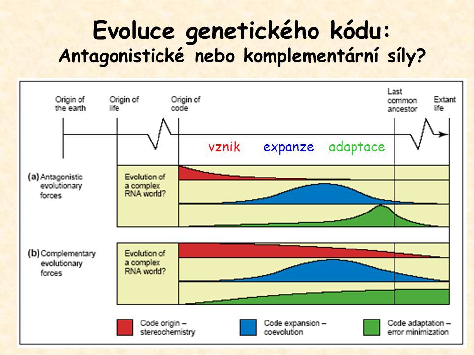 Evoluce genetického kódu: Antagonistické nebo komplementární síly