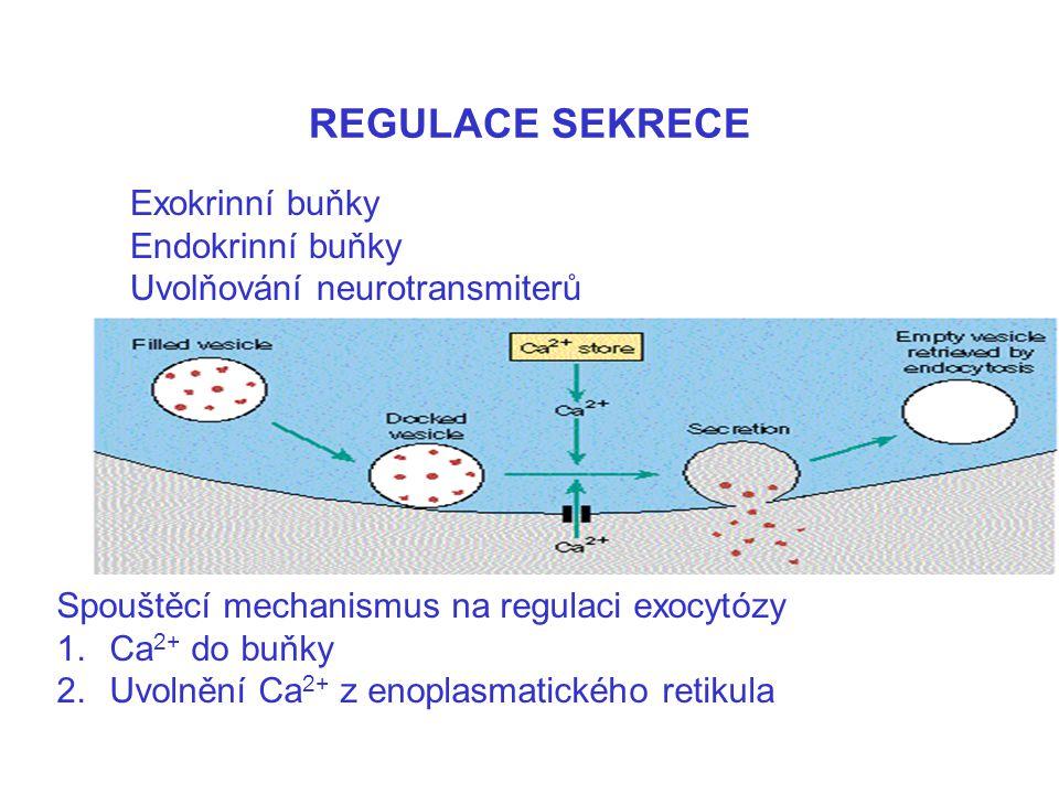 REGULACE SEKRECE Exokrinní buňky Endokrinní buňky