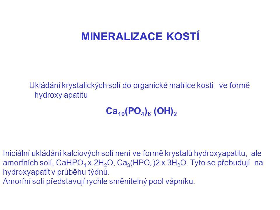 MINERALIZACE KOSTÍ Ukládání krystalických solí do organické matrice kosti ve formě hydroxy apatitu.