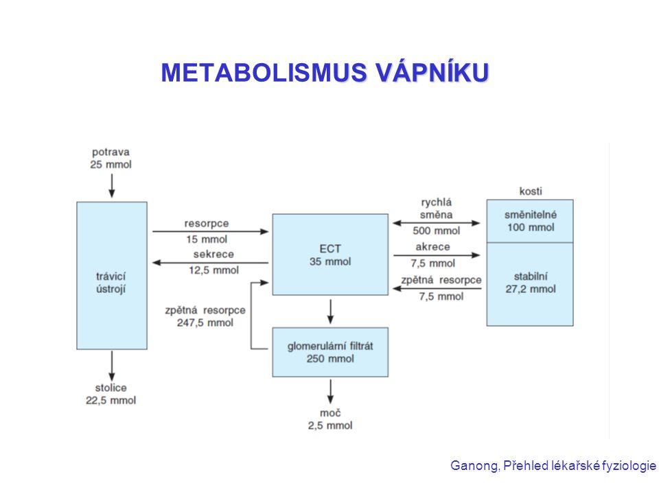 METABOLISMUS VÁPNÍKU Ganong, Přehled lékařské fyziologie