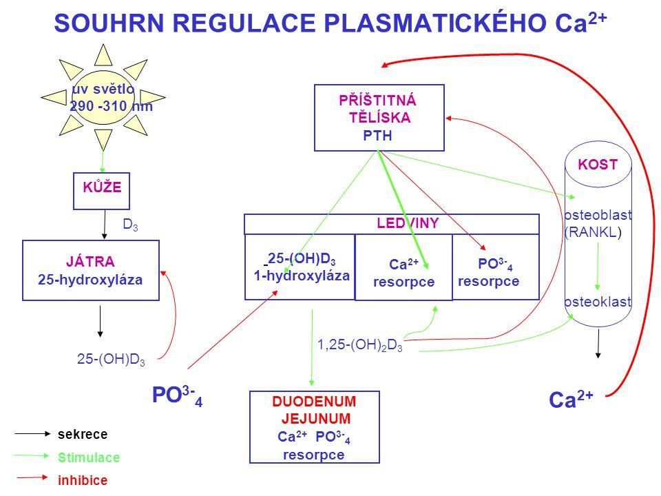 SOUHRN REGULACE PLASMATICKÉHO Ca2+