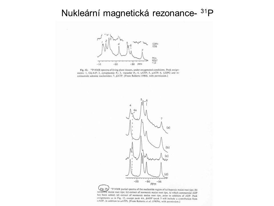Nukleární magnetická rezonance- 31P