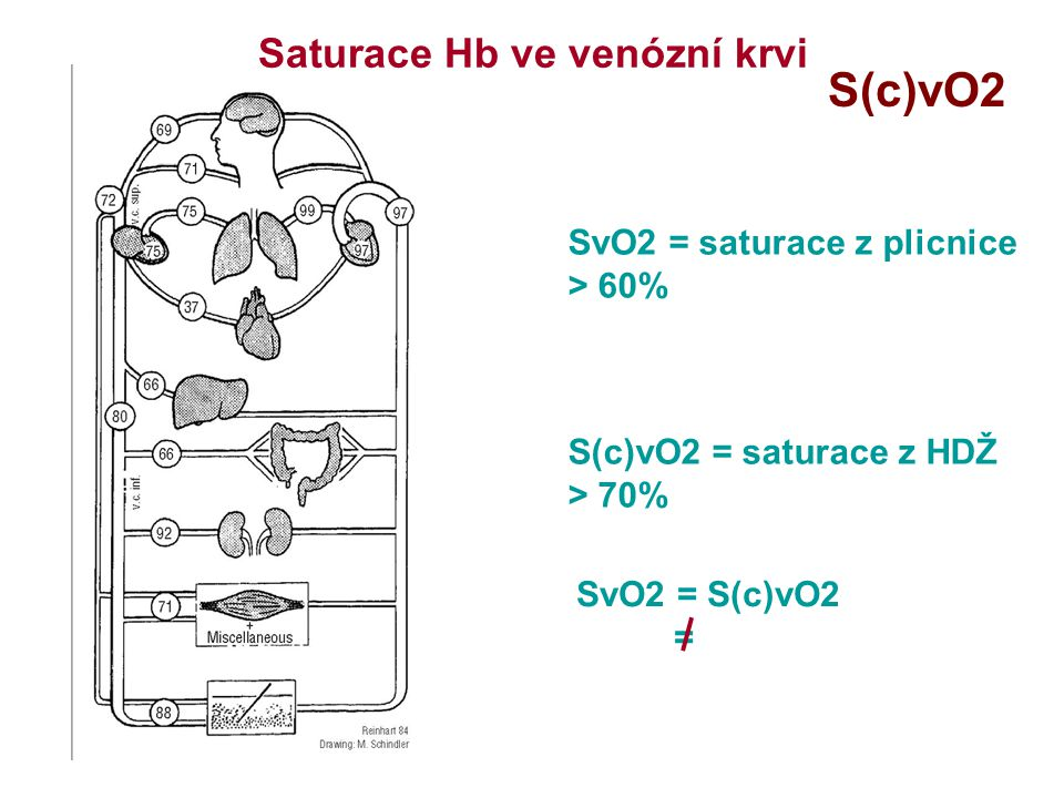 S(c)vO2 Saturace Hb ve venózní krvi SvO2 = saturace z plicnice
