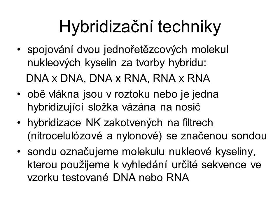 Hybridizační techniky