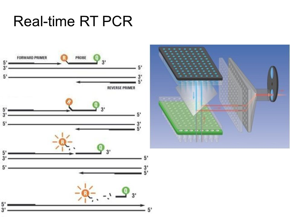Real-time RT PCR