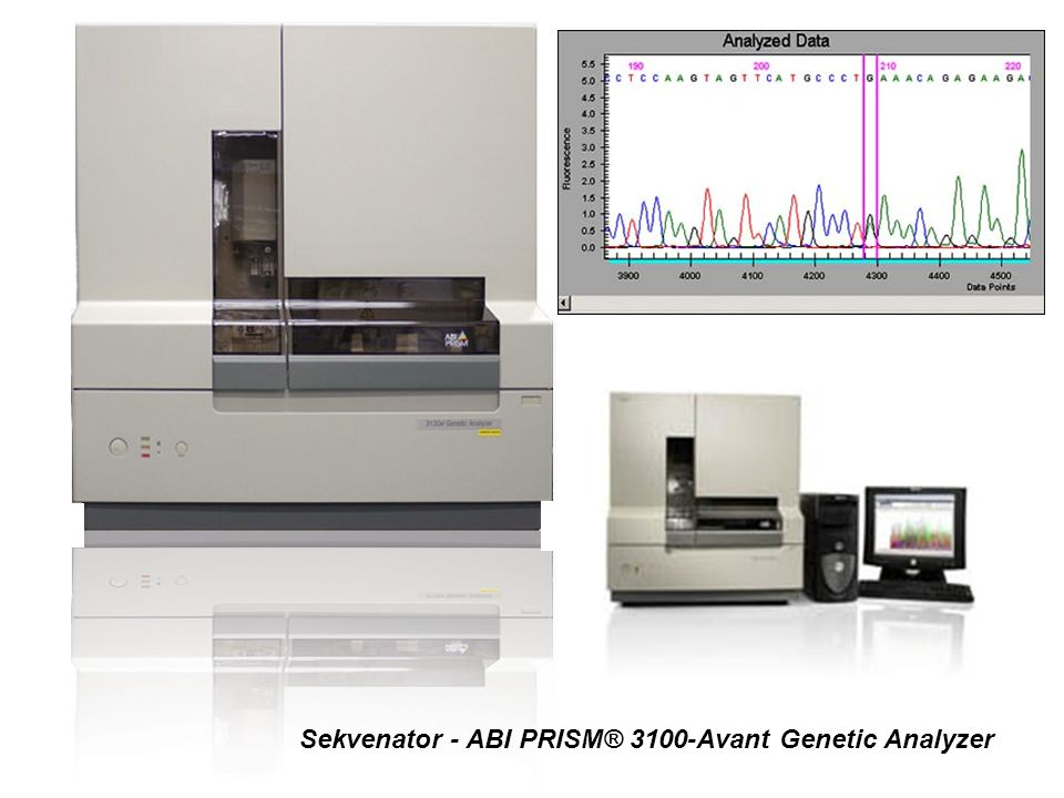 Sekvenator - ABI PRISM® 3100-Avant Genetic Analyzer