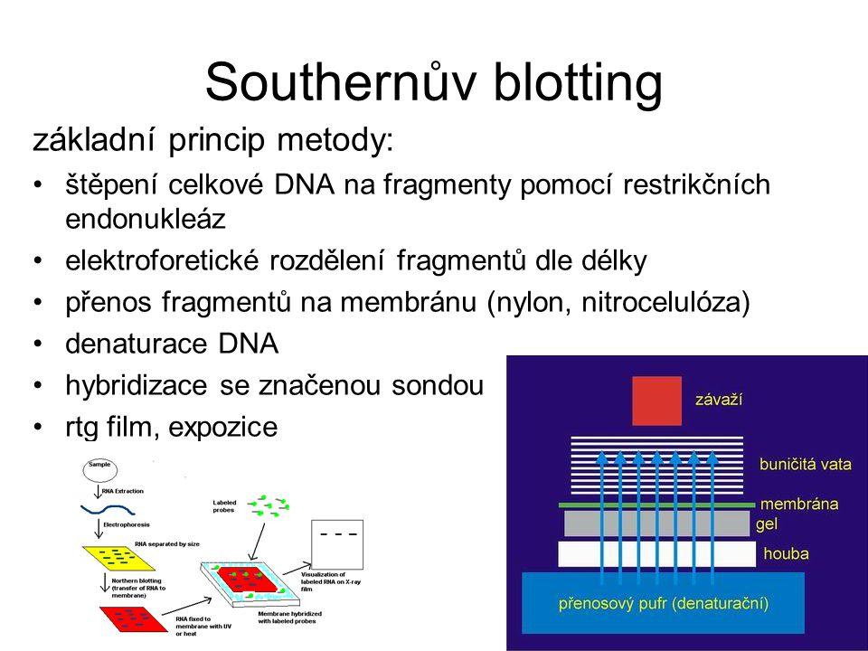 Southernův blotting základní princip metody: