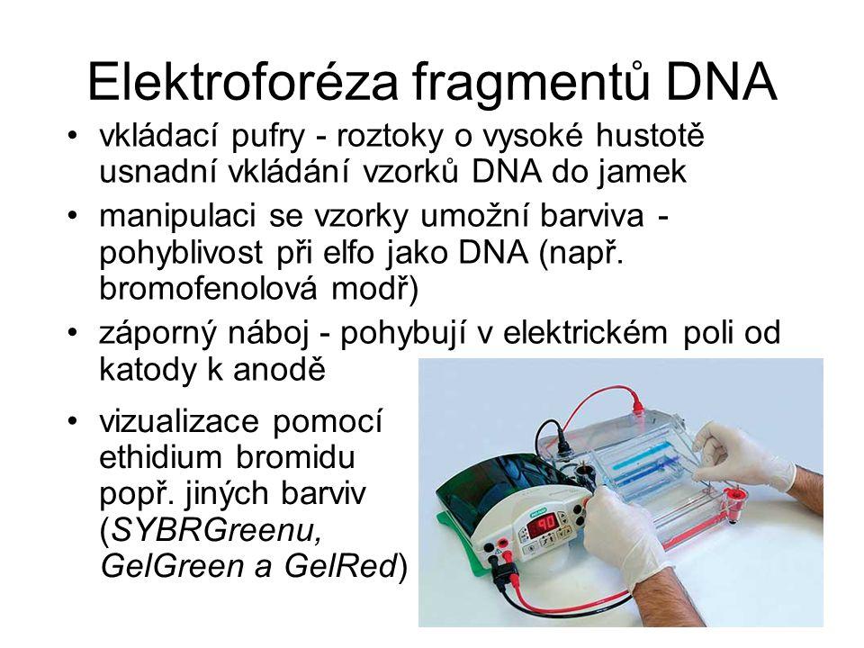 Elektroforéza fragmentů DNA