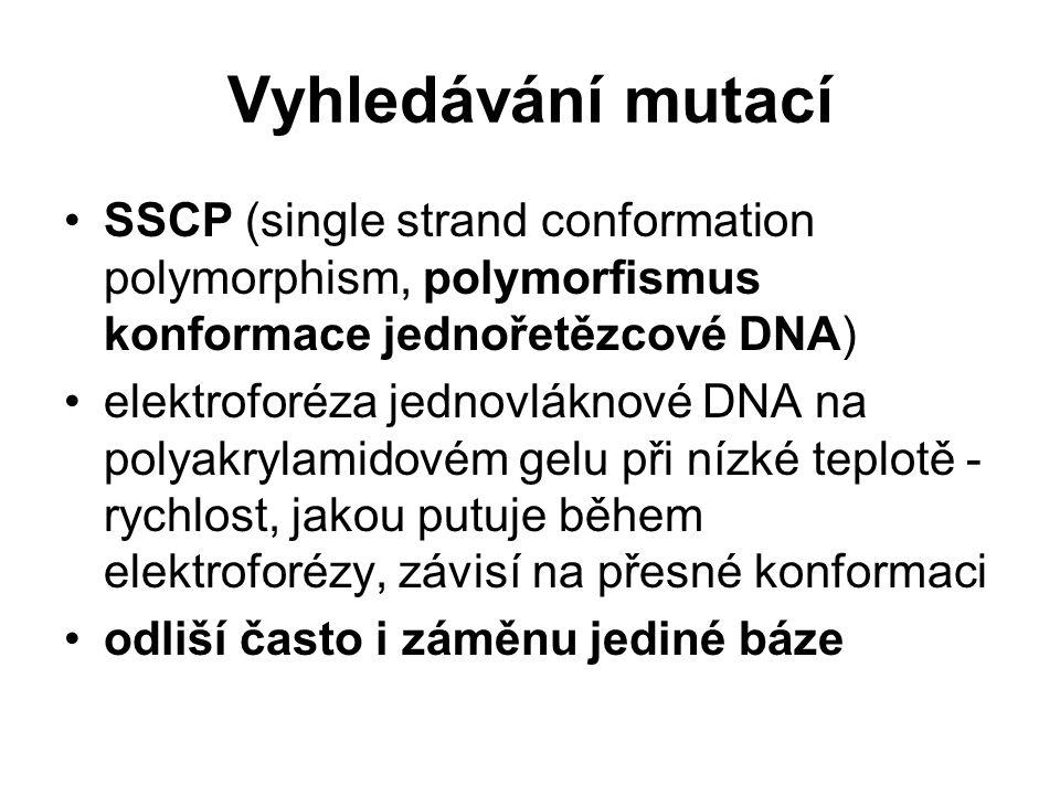 Vyhledávání mutací SSCP (single strand conformation polymorphism, polymorfismus konformace jednořetězcové DNA)
