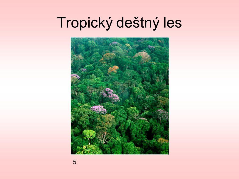 Tropický deštný les 5