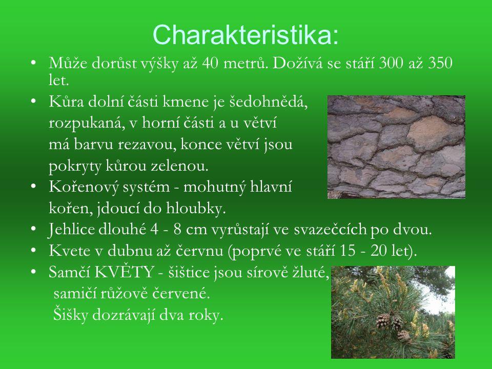 Charakteristika: Může dorůst výšky až 40 metrů. Dožívá se stáří 300 až 350 let. Kůra dolní části kmene je šedohnědá,
