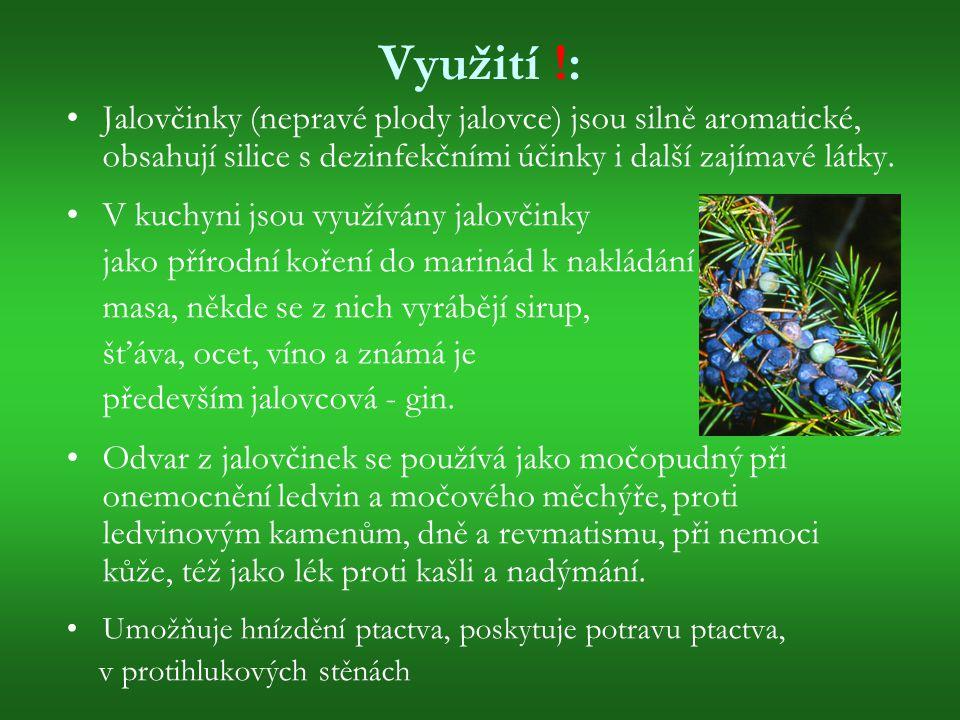 Využití !: Jalovčinky (nepravé plody jalovce) jsou silně aromatické, obsahují silice s dezinfekčními účinky i další zajímavé látky.