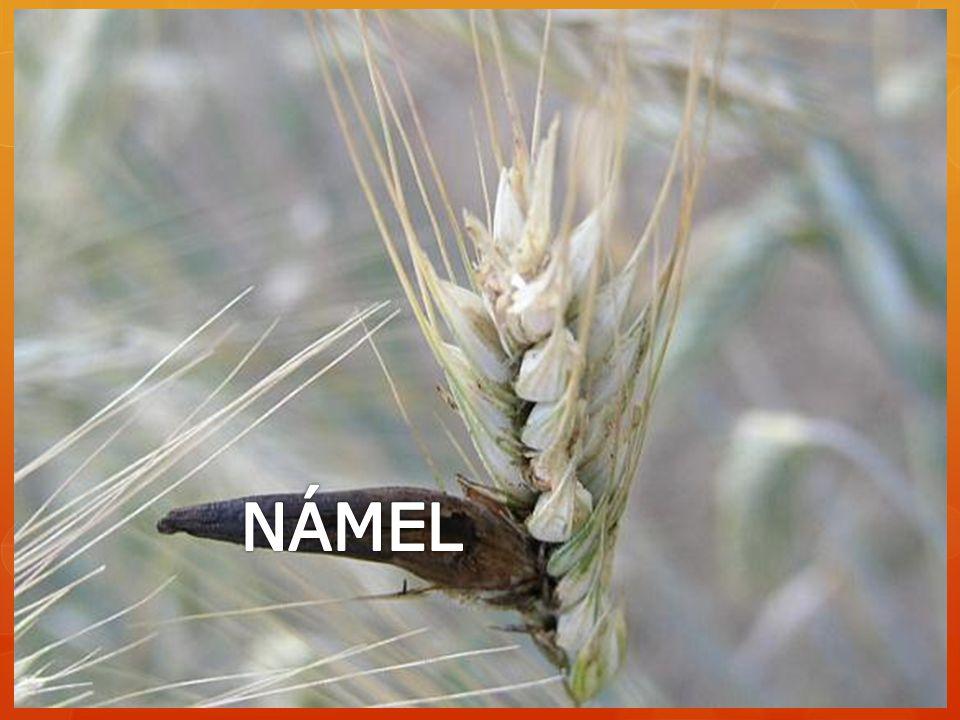 NÁMEL