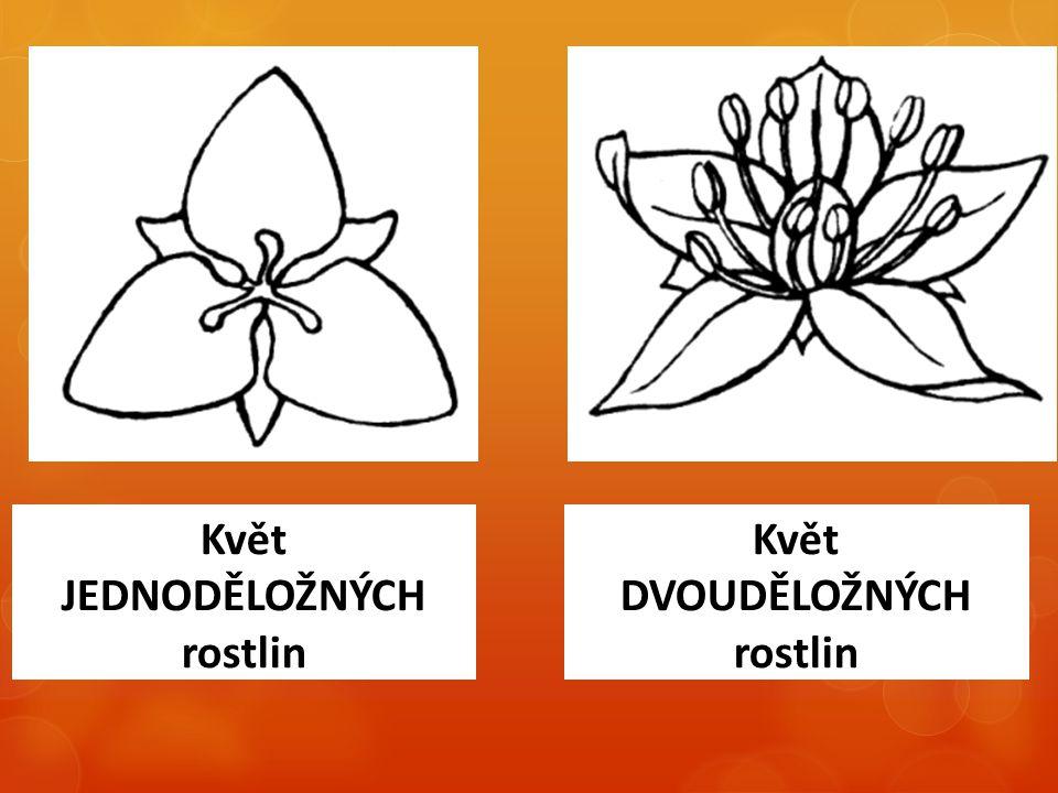 Květ JEDNODĚLOŽNÝCH rostlin Květ DVOUDĚLOŽNÝCH rostlin