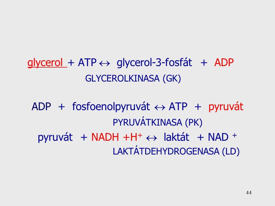 glycerol + ATP  glycerol-3-fosfát + ADP GLYCEROLKINASA (GK)