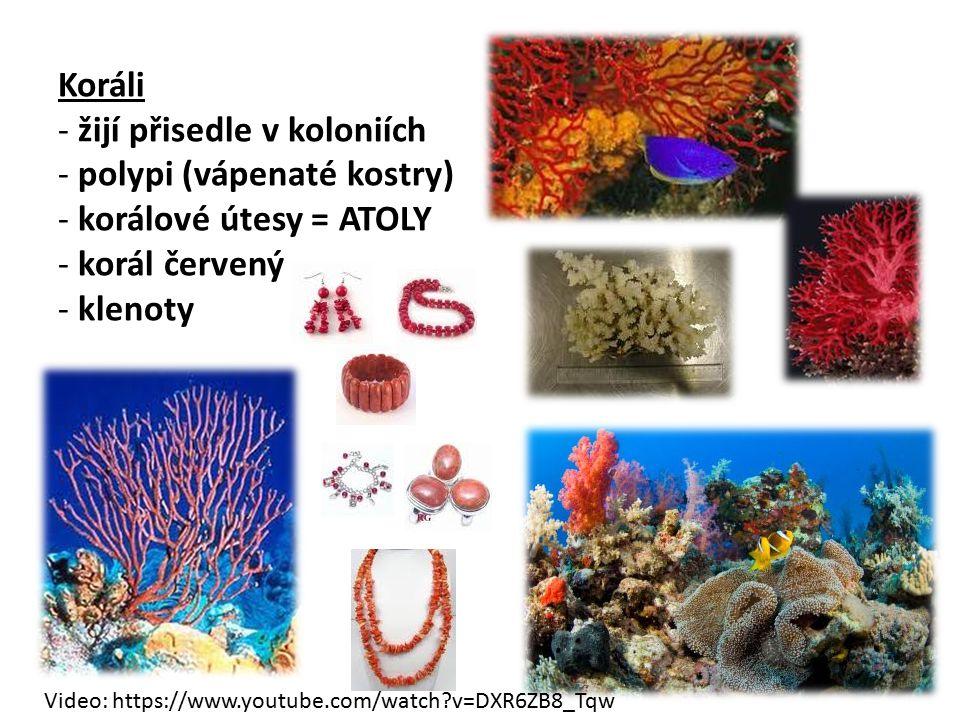 Koráli - žijí přisedle v koloniích - polypi (vápenaté kostry) - korálové útesy = ATOLY - korál červený - klenoty