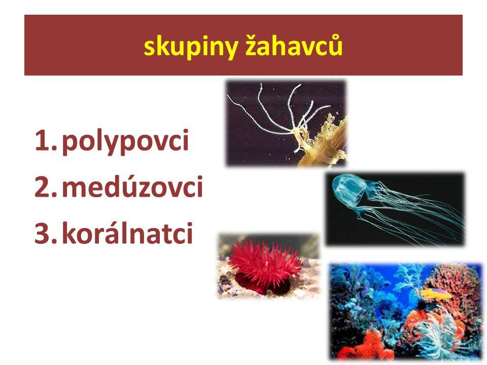 skupiny žahavců polypovci medúzovci korálnatci