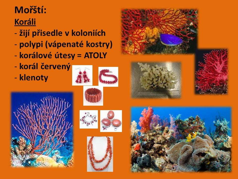 Mořští: Koráli - žijí přisedle v koloniích - polypi (vápenaté kostry) - korálové útesy = ATOLY - korál červený - klenoty