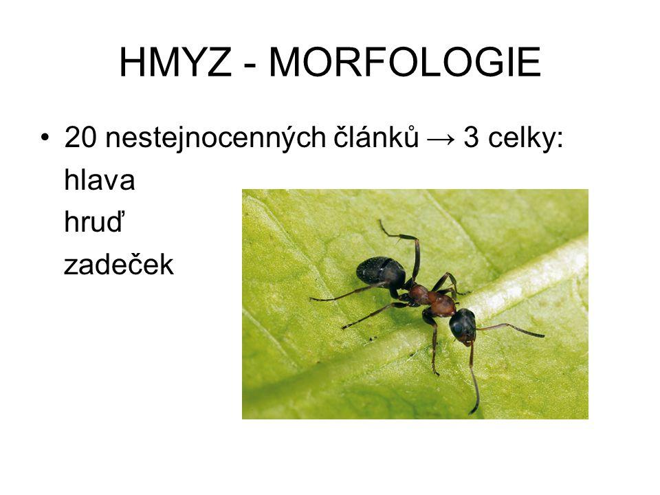 HMYZ - MORFOLOGIE 20 nestejnocenných článků → 3 celky: hlava hruď