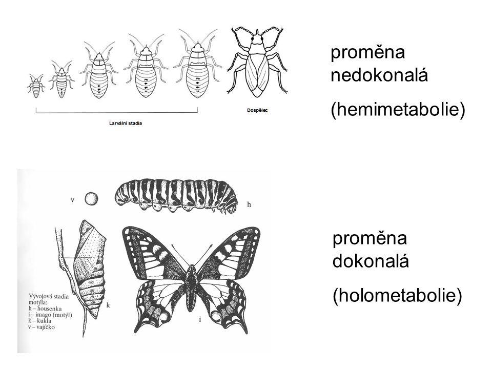 proměna nedokonalá (hemimetabolie) proměna dokonalá (holometabolie)