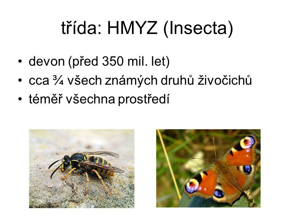 třída: HMYZ (Insecta) devon (před 350 mil. let)