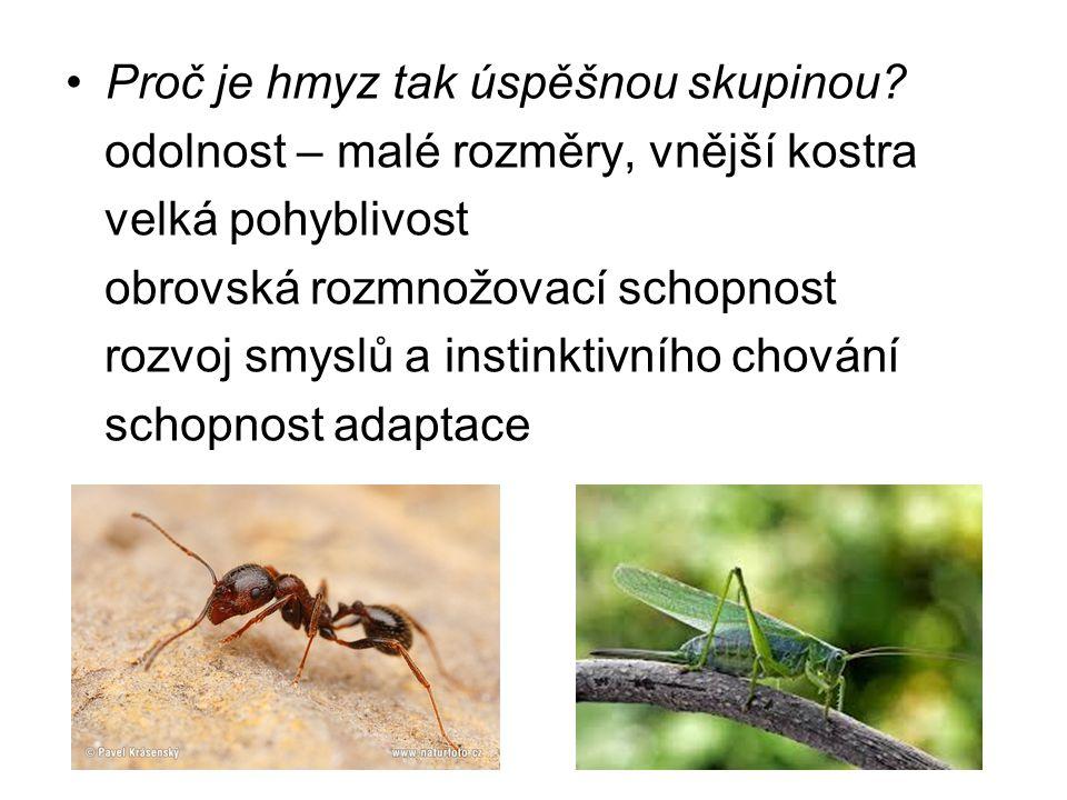 Proč je hmyz tak úspěšnou skupinou