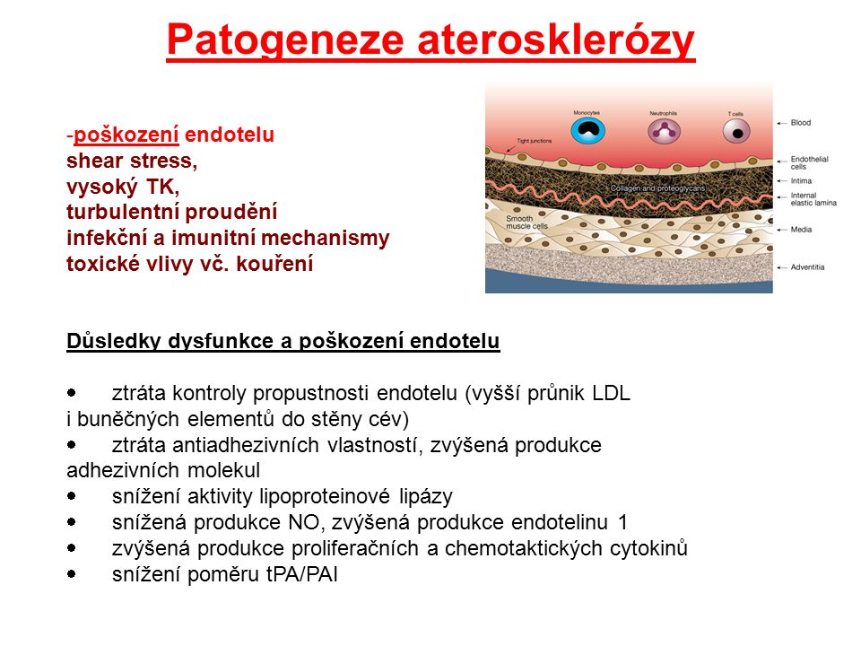 Patogeneze aterosklerózy