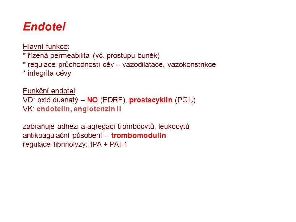 Endotel Hlavní funkce: * řízená permeabilita (vč. prostupu buněk)