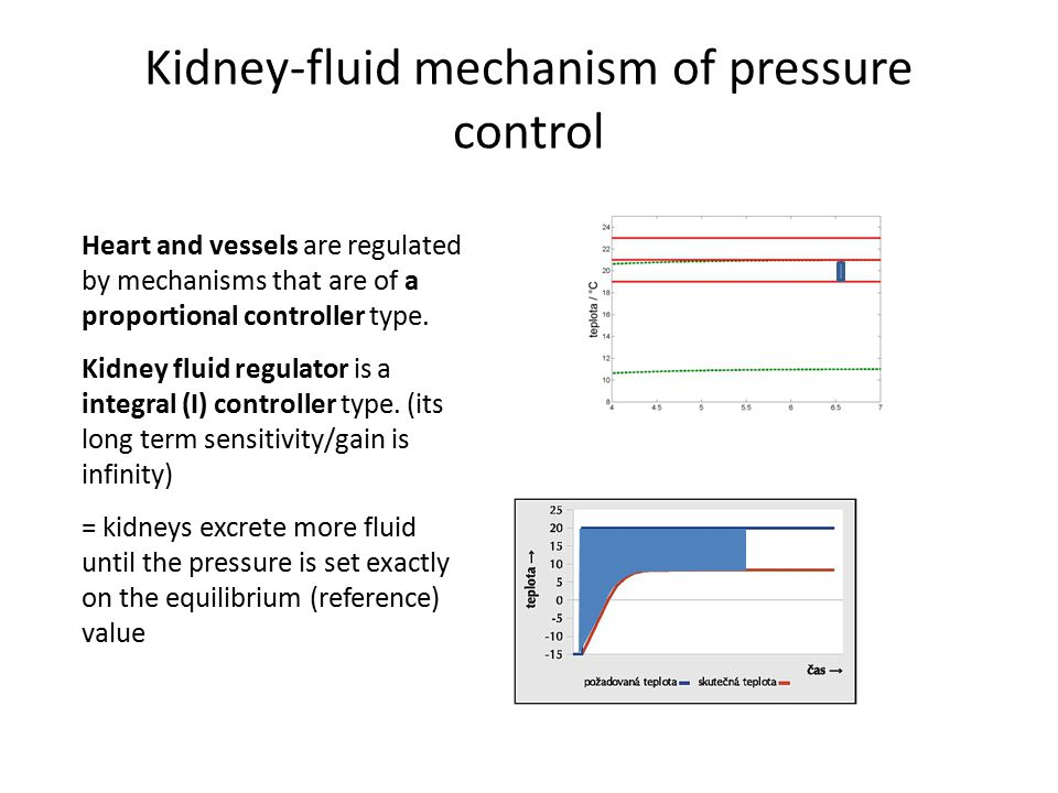 Kidney-fluid mechanism of pressure control