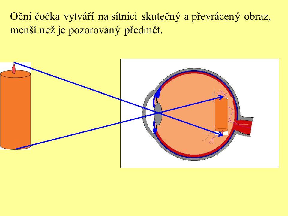 Oční čočka vytváří na sítnici skutečný a převrácený obraz, menší než je pozorovaný předmět.