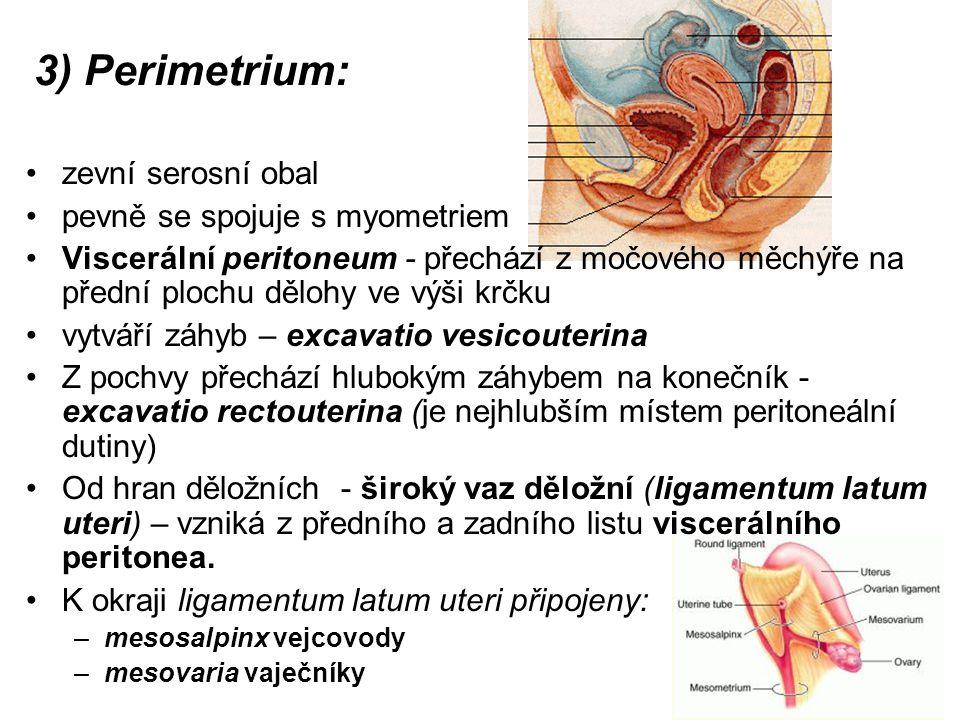 3) Perimetrium: zevní serosní obal pevně se spojuje s myometriem