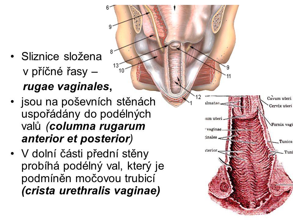 Sliznice složena v příčné řasy – rugae vaginales, jsou na poševních stěnách uspořádány do podélných valů (columna rugarum anterior et posterior)