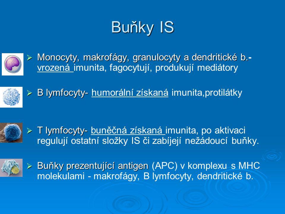 Buňky IS Monocyty, makrofágy, granulocyty a dendritické b.- vrozená imunita, fagocytují, produkují mediátory.