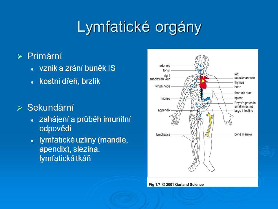 Lymfatické orgány Primární Sekundární vznik a zrání buněk IS