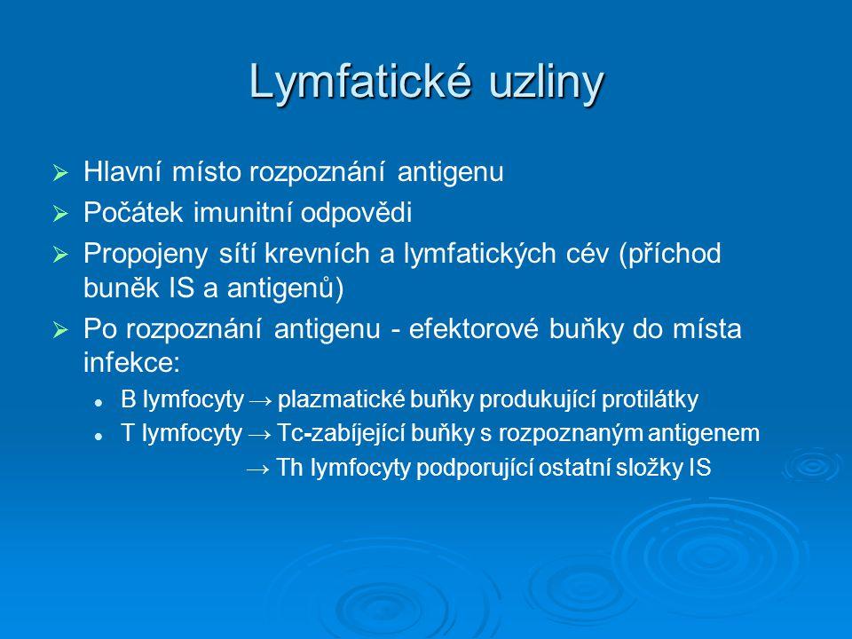 Lymfatické uzliny Hlavní místo rozpoznání antigenu