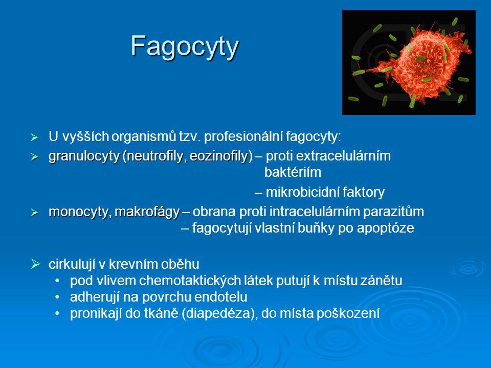 Fagocyty U vyšších organismů tzv. profesionální fagocyty: