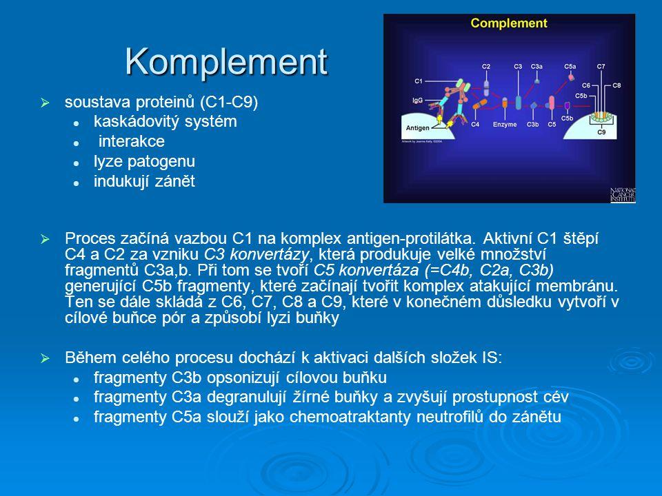 Komplement soustava proteinů (C1-C9) kaskádovitý systém interakce
