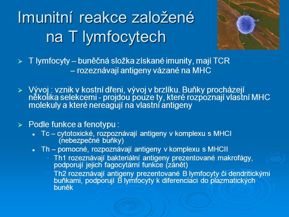 Imunitní reakce založené na T lymfocytech