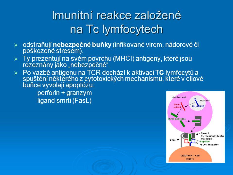 Imunitní reakce založené na Tc lymfocytech