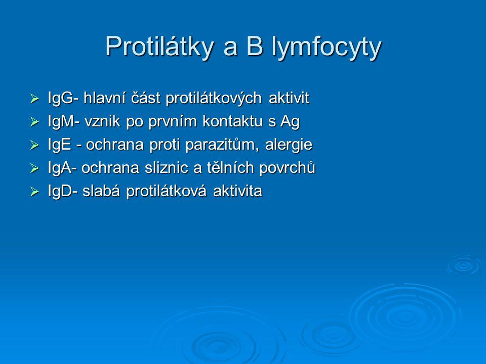 Protilátky a B lymfocyty
