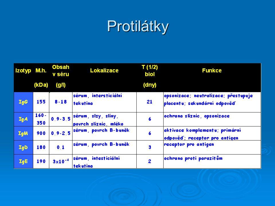 Protilátky