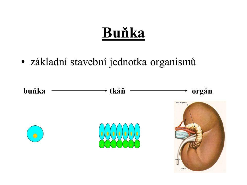 Buňka základní stavební jednotka organismů buňka tkáň orgán
