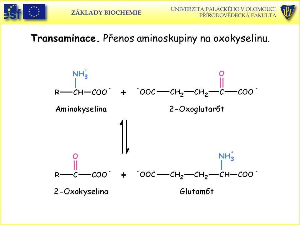 Transaminace. Přenos aminoskupiny na oxokyselinu.