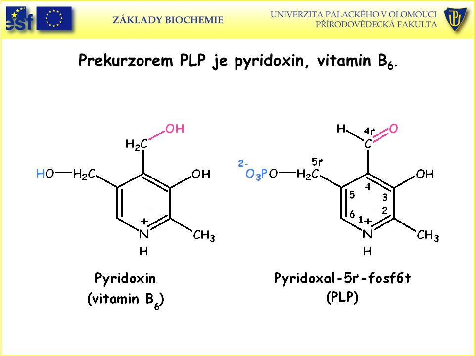 Prekurzorem PLP je pyridoxin, vitamin B6.