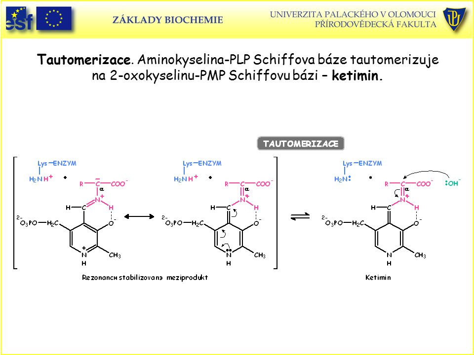 Tautomerizace. Aminokyselina-PLP Schiffova báze tautomerizuje na 2-oxokyselinu-PMP Schiffovu bázi – ketimin.