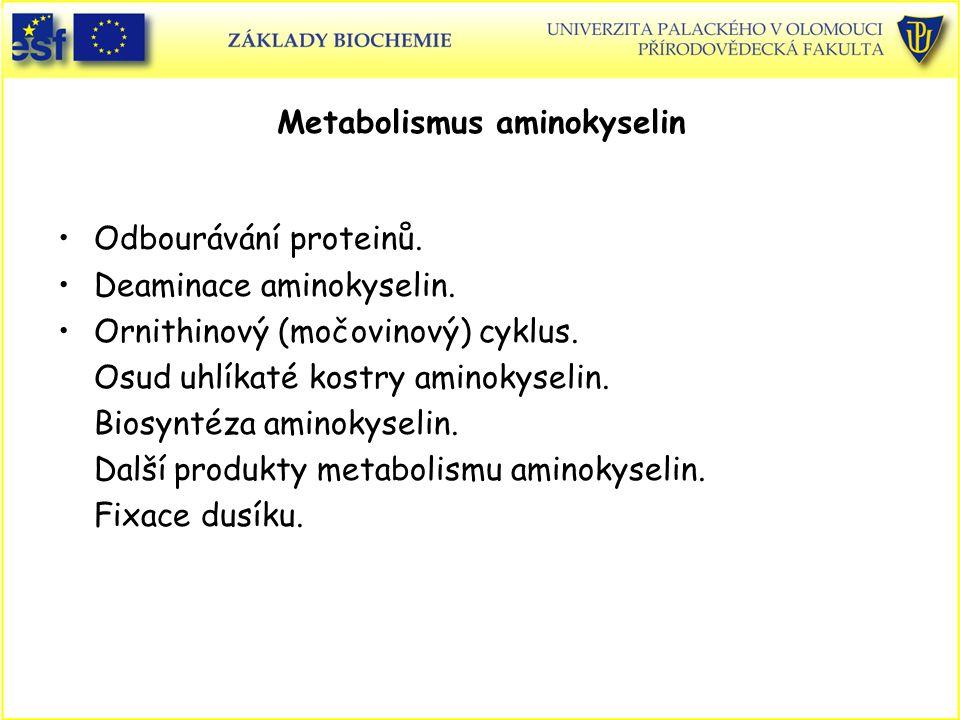 Metabolismus aminokyselin
