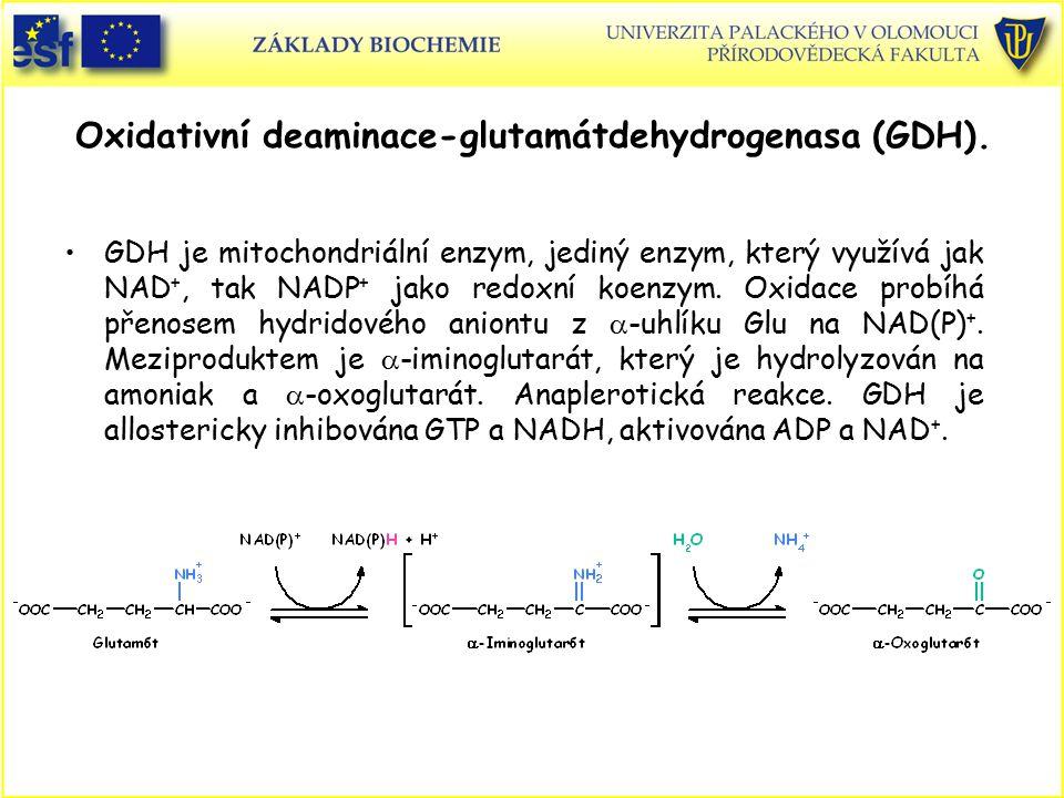Oxidativní deaminace-glutamátdehydrogenasa (GDH).